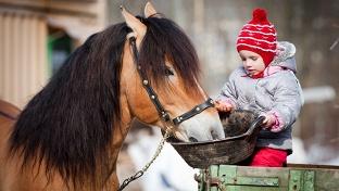 Купон на конные прогулки. Романтическая прогулка верхом на лошадях для одного или двоих от конно-любительского клуба «Комета» -70% - купон в Екатеринбурге