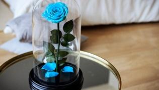 Роза вколбе