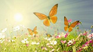Билет навыставку бабочек