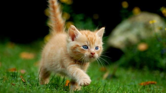 Кастрировать кота в волгограде