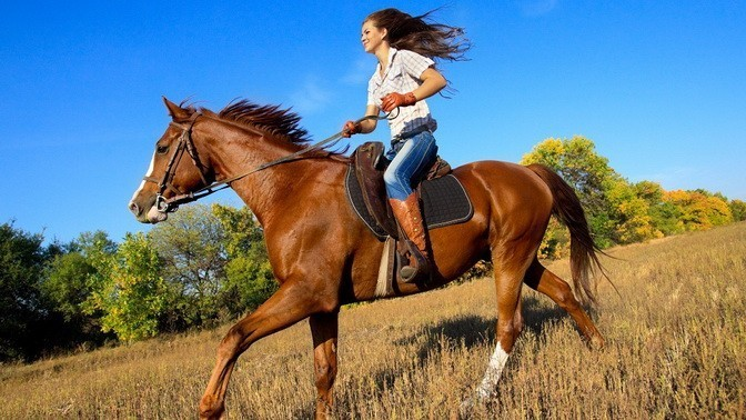 my hobby is riding horse Shop for hobby horse online at target free shipping on purchases over $35 and save 5% every day with your target redcard.