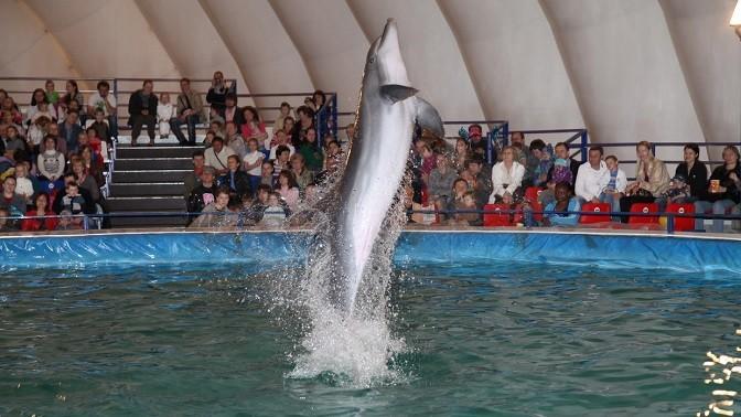 Дельфинарий в вднх цены