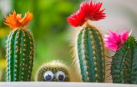 """3. Во время мастер-класса  """"Выращиваем экзотические кактусы """" вы узнаете секреты ухода за кактусами и суккулентами..."""