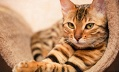 Коты-круты