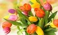 Первая цветочная компания