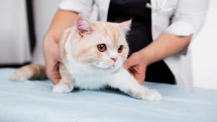 Стрижка или мытье кошки