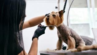 Груминг для собак икошек
