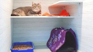 Отель для кошек