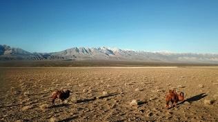 Тур вМонголию
