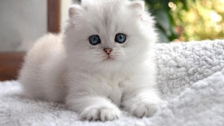 Фотосессия с котиками