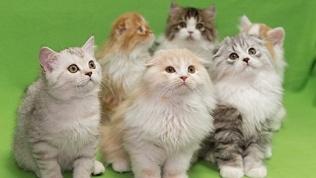 Билет навыставку кошек