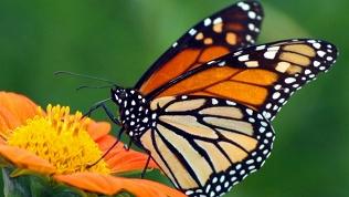 Выставка живых бабочек