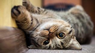 Антикафе «Кот надереве»