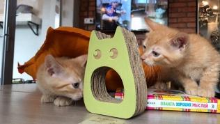 Котокафе «Город кошек»