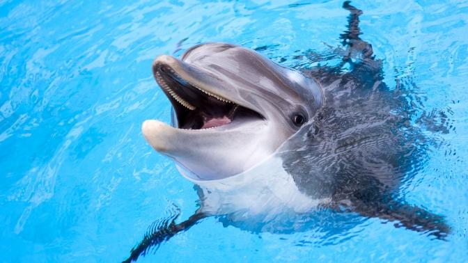 Билет нашоу-программу «Музыка моря» сигровым аттракционом, фоторепортажем ифото сдельфином отЯрославского дельфинария