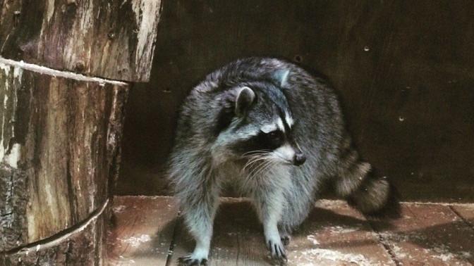 Посещение зоопарка вТРК «Галактика» или СБС «Мегамолл» соскидкой50%