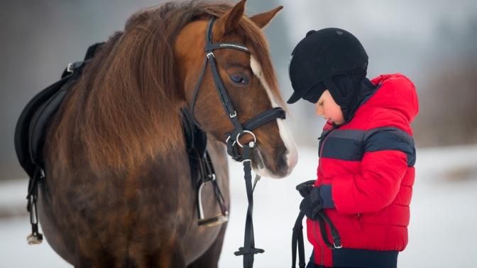 Прогулка вкарете, фотосессия слошадью, конная прогулка отКСК «Баллада»