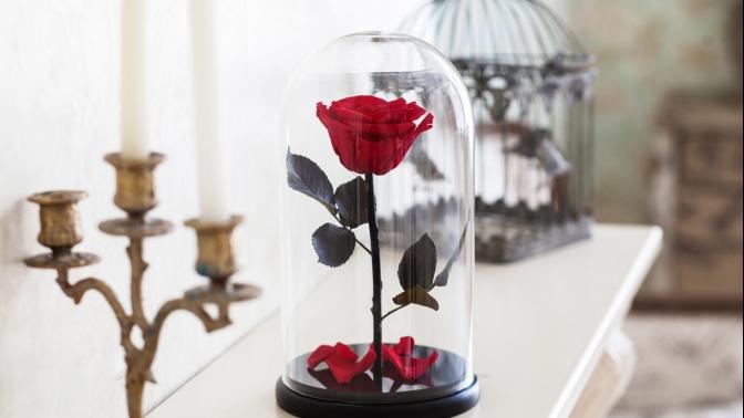 Роза вколбе соткрыткой вподарок (1536руб. вместо 2560руб.)