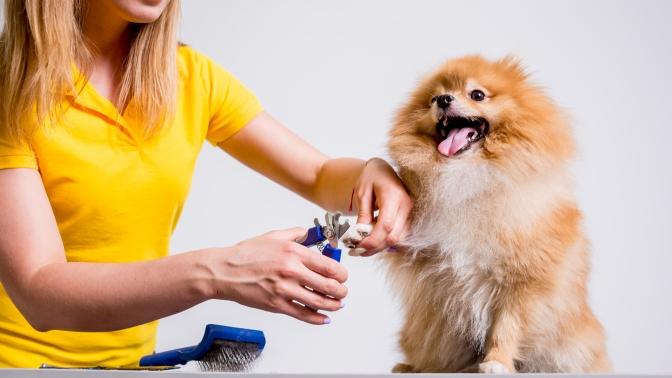 Груминг для собак или кошек всалоне для собак «Даниэль»