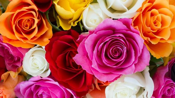 Букет изкенийских или эквадорских роз либо сборный букет