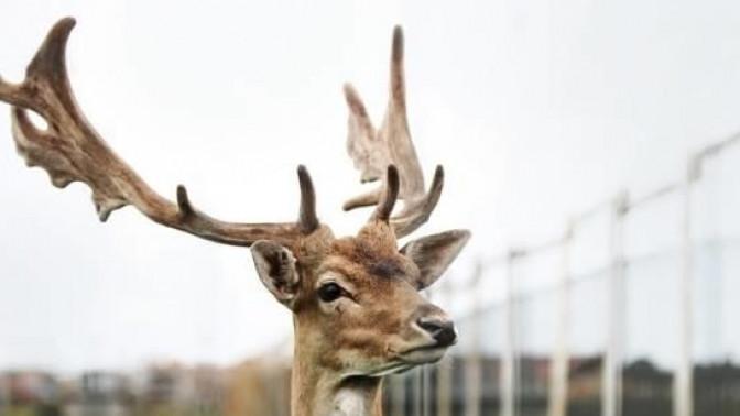 Отдых напобережье реки Дунайки вномере спосещением зоопарка или аренда беседки вапартаментах «Подворье наХуторской»