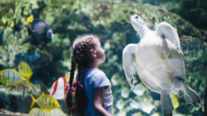 Посещение океанариума
