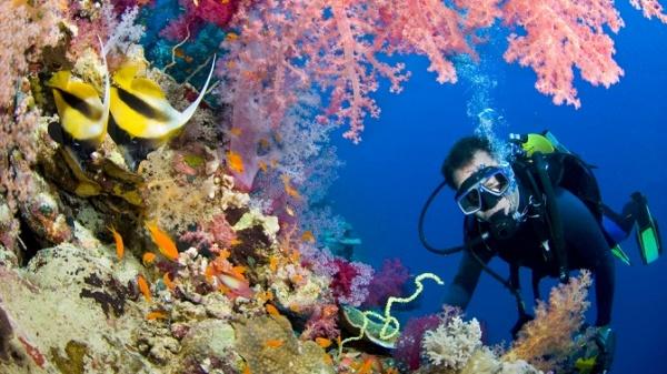 Клуб подводного плавания москва работа ночных клубов